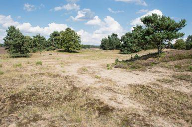 Senne - Sandtrockenrasen auf Binnendüne, LRT 2330