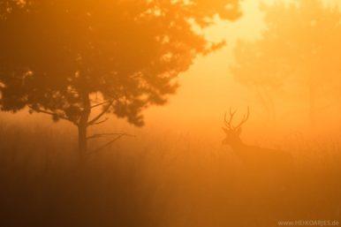 Halleluja-Licht Rotwild in der Senne Heiko Arjes