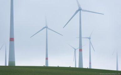 Rehwild im Windpark